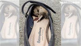 襪子,鞋子,老鼠,米奇,消毒(圖/Kerry Weng授權提供)