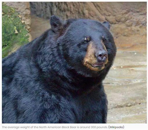 熊女士和熊生活28年,陳屍森林死因揭曉超感人。(圖/翻攝Heavy News)