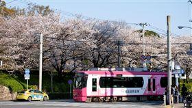 路面電車與櫻花日本東京飛鳥山公園前的路面電車是跟一般汽車混合行駛,是一個拍攝路面電車與櫻花的好景點。中央社記者黃名璽東京攝  107年3月26日