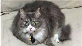 資深貓總裁的11歲貓咪「Bambino」。(圖/翻攝自LoveMeow網站)