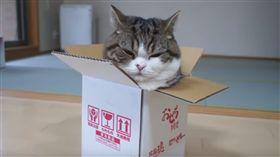 紙箱貓▲圖/翻攝自YouTube