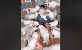 大陸有名網紅上傳自己與貓咪互動的影片引來網友熱議,原因是他竟然把自己的身體當碗,放滿飼料讓家中20多隻貓咪們集體上來吃飯,獨特的「餵食」方式讓網友大喊「好羨慕!」、「傳說中的貓療法!」,但也有人認為這種「人體盛」的特殊行徑相當不衛生!(圖/翻攝自臉書爆笑公社)
