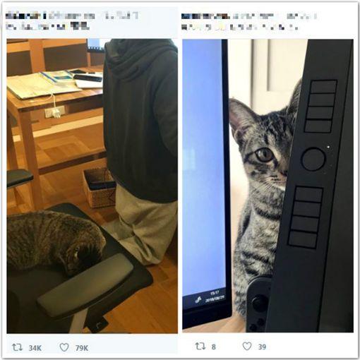 上班中貓咪拼命打擾主人辦公。(圖/翻攝自Twitter)