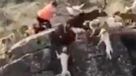 西班牙獵犬追捕野鹿一起墜崖。(圖/翻攝太陽報)
