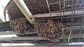 蜜蜂,吳萼洋,蜂蜜檸檬(圖/翻攝自爆廢公社)