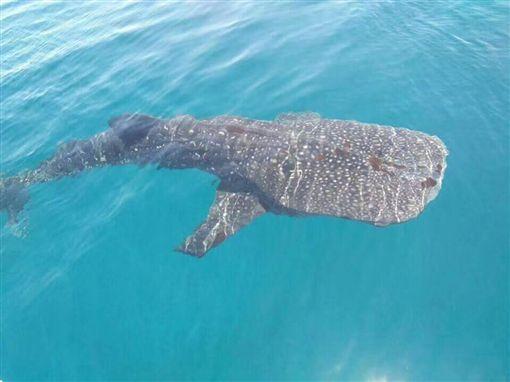 長灘島鯨鯊回歸 搶先登島享美景!