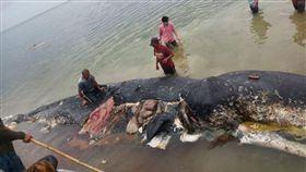 抹香鯨,死亡,海洋垃圾,印尼,塑膠 (圖/翻攝自推特)