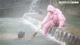 劉以豪救美反溺水。(圖/歐銻銻娛樂提供)