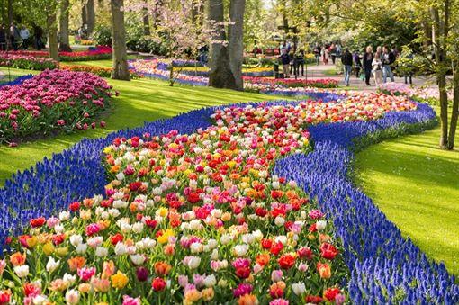 歐洲花季(業配)