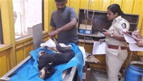 印度,孟買,公狗,生殖器,性侵,動保,重傷,死亡 圖/翻攝自臉書