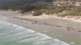 影片曝光!145頭鯨魚意外擱淺死亡 讓人超痛心(圖/翻攝自 Department of Conservation YouTube)