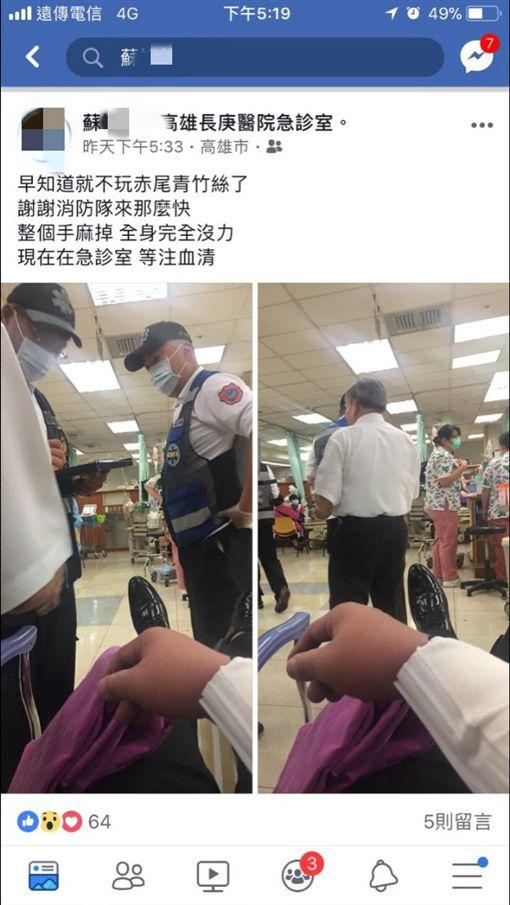 男子直播挑釁赤尾青竹絲被咬送醫/臉書