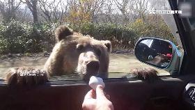 餵俄熊吃餅1700