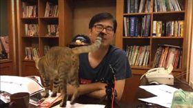 陳其邁臉書直播,愛貓瘋狂亂入。(圖/翻攝自陳其邁臉書)