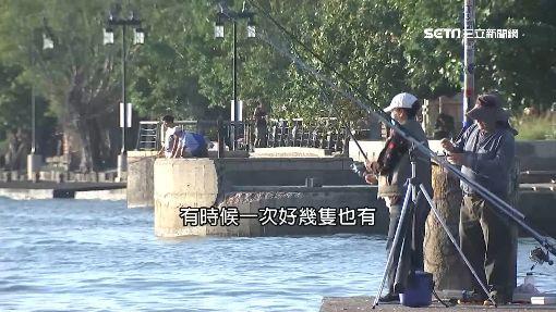 瘋釣魚!淡水河口最熱門 魚種多「易上鉤」
