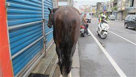 宜蘭,馬,車禍,機車,肇事者(圖/翻攝畫面)