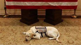 老布希的服務犬薩利。(圖/翻攝自Instagram@sullyhwbush)