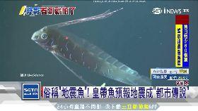 日現地震魚1900
