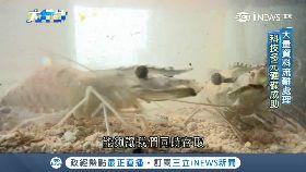 AI養殖蝦(12月底前勿刪)