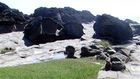 東管處擬推動小野柳更名富岡地質公園台東富岡海岸因地質景觀和北海岸野柳風景區相似,被稱為「小野柳」。交通部觀光局東部海岸國家風景區管理處有意更名為「富岡地質公園」,引起地方關切。中央社記者盧太城台東攝 107年12月5日