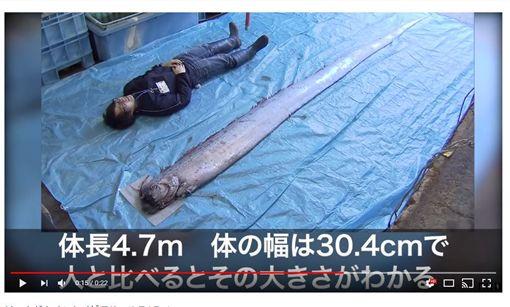 日本捕獲拒大皇帝魚(地震魚)圖翻攝自FNN.jpプライムオンライン yt