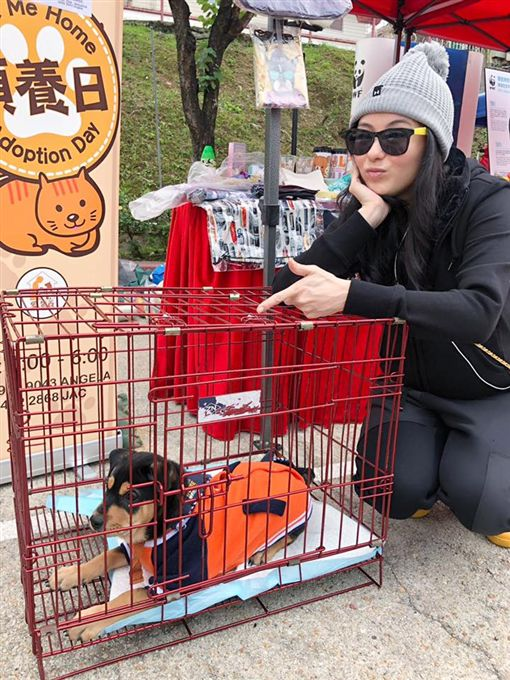 張柏芝/翻攝自Love Adopt Animal Society 愛領養動物中心