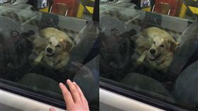 忠心護主的狗狗不難見到,但忠心護車的狗狗恐怕就真的沒幾隻了,日前就有網友在報廢公社PO出一段爆笑影片引來網友討論,有一隻可愛的黃金獵犬坐在車上等主人,有路人經過對牠揮了揮手,想不到牠畫風一變瞬間露出呲牙裂嘴的表情,彷彿是車子的「防盜系統」不准別人靠近,有網友看完影片後更在底下搞笑留言「一隻雞腿,就關閉系統」。(圖/翻攝自臉書爆廢公社)