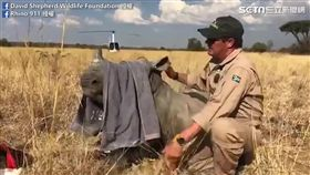 小犀牛顫抖依偎在媽媽屍體旁兩日,險些餓死。(圖/David Shepherd Wildlife Foundation臉書授權)