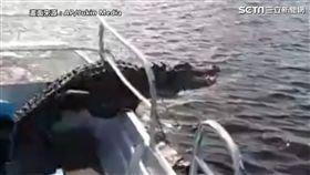鱷魚爬上船。(圖/AP/Jukin Media 授權)