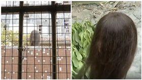 大陸,廣州,假人頭,頂樓,窗簾(圖/翻攝自看看新聞)