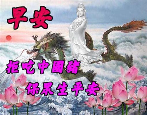 「非洲豬瘟」長輩圖(圖/翻攝自網路、LINE群組)
