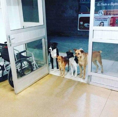 流浪漢病倒住院 4隻狗狗來探望/中國報
