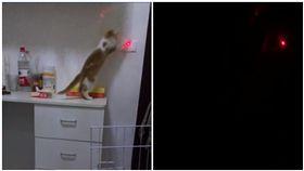 讓貓咪幫忙關燈/爆廢公社公開版