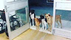 「我們等你!」流浪漢營養不良病倒 狗夥伴醫院外忠心守候(圖)/擷取自Cris Mamprim臉書)