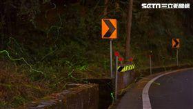 阿里山,螢火蟲,復育,冬螢,/公路總局提供