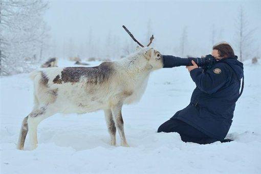 俄羅斯麋鹿取暖(圖/翻攝網路)