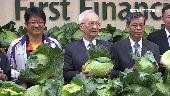 力挺農民!銀行業買百噸高麗菜免費送