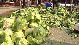 千人攪泡菜1200