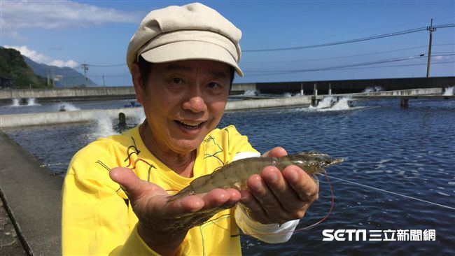 2XL級無毒白蝦 吃蝦免驚會過敏
