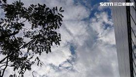 天氣,氣象局,東北季風,大陸冷氣團