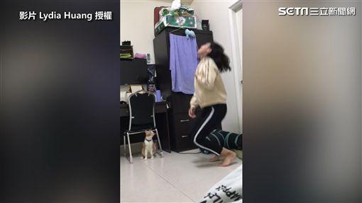 ▲鏟屎官在貓皇面前上演受重傷戲碼。(圖/Lydia Huang 授權)