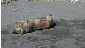 16:9 別驚慌!宜蘭海邊驚見豬屍 防疫所初步排除為非洲豬瘟 圖/翻攝自宜蘭知識+臉書