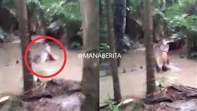 鱷魚啃屍 圖/翻攝自《MANABERITA.com》