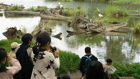 池畔賞鳥木作童玩 羅東林管處推親子遊宜蘭羅東林業文化園區自然生態豐富,為推廣當地自然生態及木材資源利用,林管處在明年推出「池畔賞鳥趣」還有「木要這樣玩」兩大親子活動。(羅東林管處提供)中央社記者沈如峰宜蘭傳真 107年12月23日