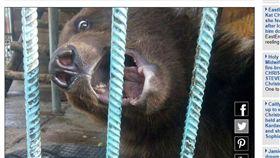 俄羅斯棕熊咬斷婦人手臂(圖/翻攝自每日郵報)