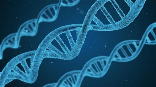 顯微鏡、DNA、基因檢測/示意圖/pixabay