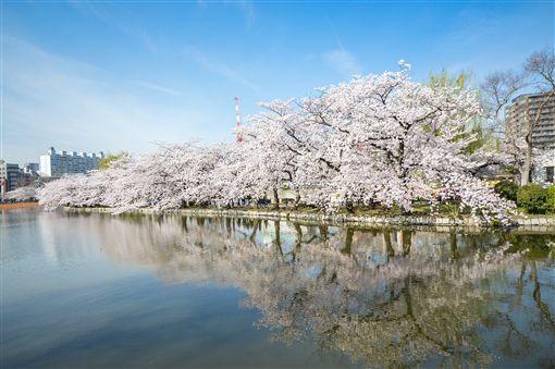 圖5-上野恩賜公園-櫻shutterstock_592478702
