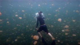 帛琉水母湖重新開放,遊客可享受與數以萬計無毒水母一起共游。(圖/翻攝自YouTube)