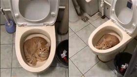 貓咪雖然很可愛但是性格高深莫測!家中有養貓的民眾一定都知道,貓咪習慣找各種不同的容器然後把自己塞進去,躲在裡面休息,但你有想過嗎?馬桶竟然也成了喵皇的「棲息地」!一名網友在臉書社團Po文,表示半夜起來要上廁所,沒想到掀開馬桶,驚見家中橘貓竟然大喇喇的坐在馬桶中,讓他哭笑不得。
