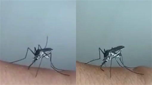 疾病,蚊子,口氣,皮膚,吸血,軟掉,彎曲,歪掉,碰壁,昆蟲,蟑螂,傳染 圖/翻攝自YouTube https://youtu.be/mT_r3xBKtCc